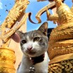 Na każdym kroku świątynia. Kapiąca od złota i... z kotem przed lub w środku! To ci niespodzianka :)