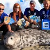 I całkiem poważnie. Błękitny Patrol WWF Polska i akcja ratowania bałtyckich fok. Pomagamy!