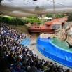 Portugalczycy są doskonale przygotowani na przyjęcie turystów. Piekne delfinarium z pokazem. Najpierw w roli głównej foka.