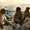 Wydaje się, że dla turystów (nie licząc tych z Polski) największą atrakcją są małpy.