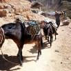 Jedyny sposób na skuteczny transport w rejonie kanionu to poczciwe osiołki i muły.